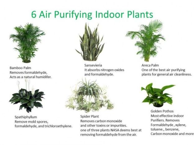 6airpurifihouseplants